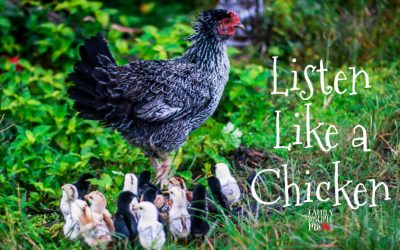 Listen Like a Chicken